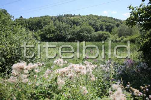Bild-Nr: 4des Objektes K10 Naturschutzmassnahmen Chernensee/Bodenaufwertung Lee